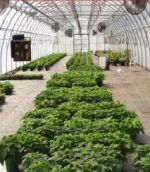 Greenhouse with energy saving design.